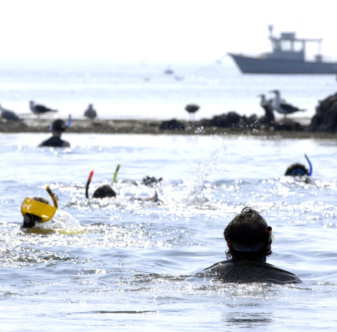 Students UNH's scuba diving program snorkel in the Atlantic Ocean.