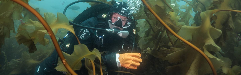 Diver in Kelp Bed