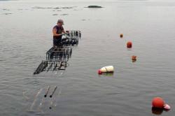 multi trophic aquaculture