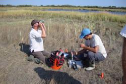 tidal marsh management