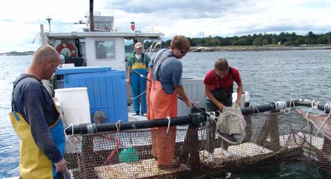 students conducting smsoe aquaculture harvesting