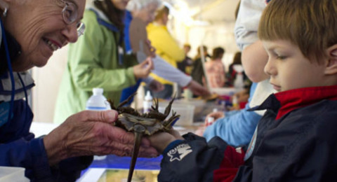 A marine docent shows a young boy a horseshoe crab at Ocean Discovery Day.
