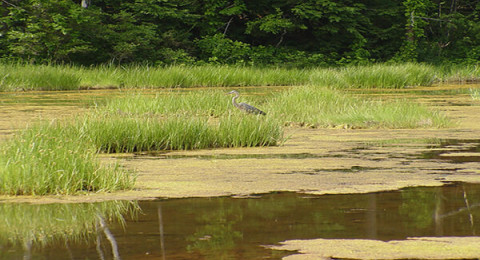 A view of a marsh where the Piscataqua Region Estuaries Partnership (PREP) works to maintain water quality and a healthy ecosystem.