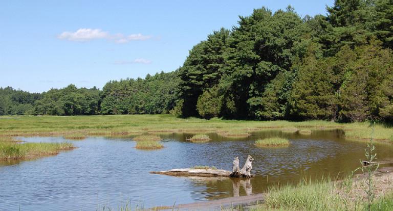 Eelgrass and Shellfish Habitat