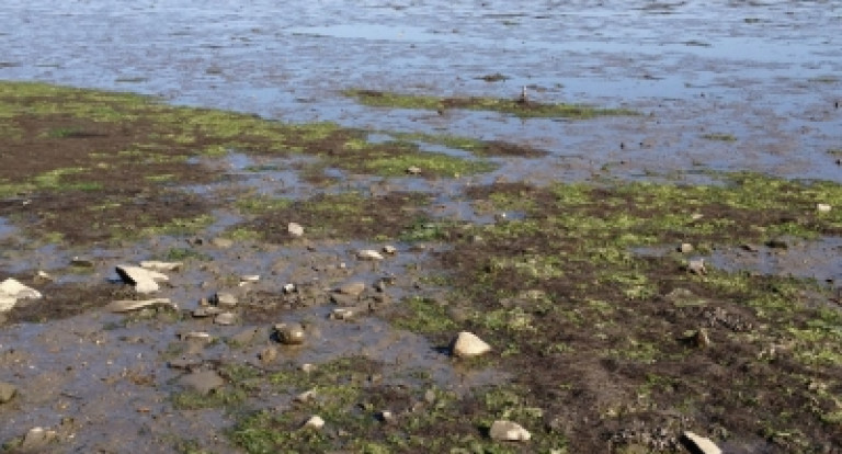 Monitoring of macroalgea in the Great Bay Estuary