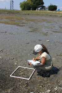 researcher examining algae