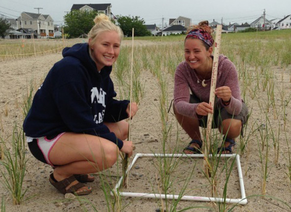 nh seagrant seagrass research