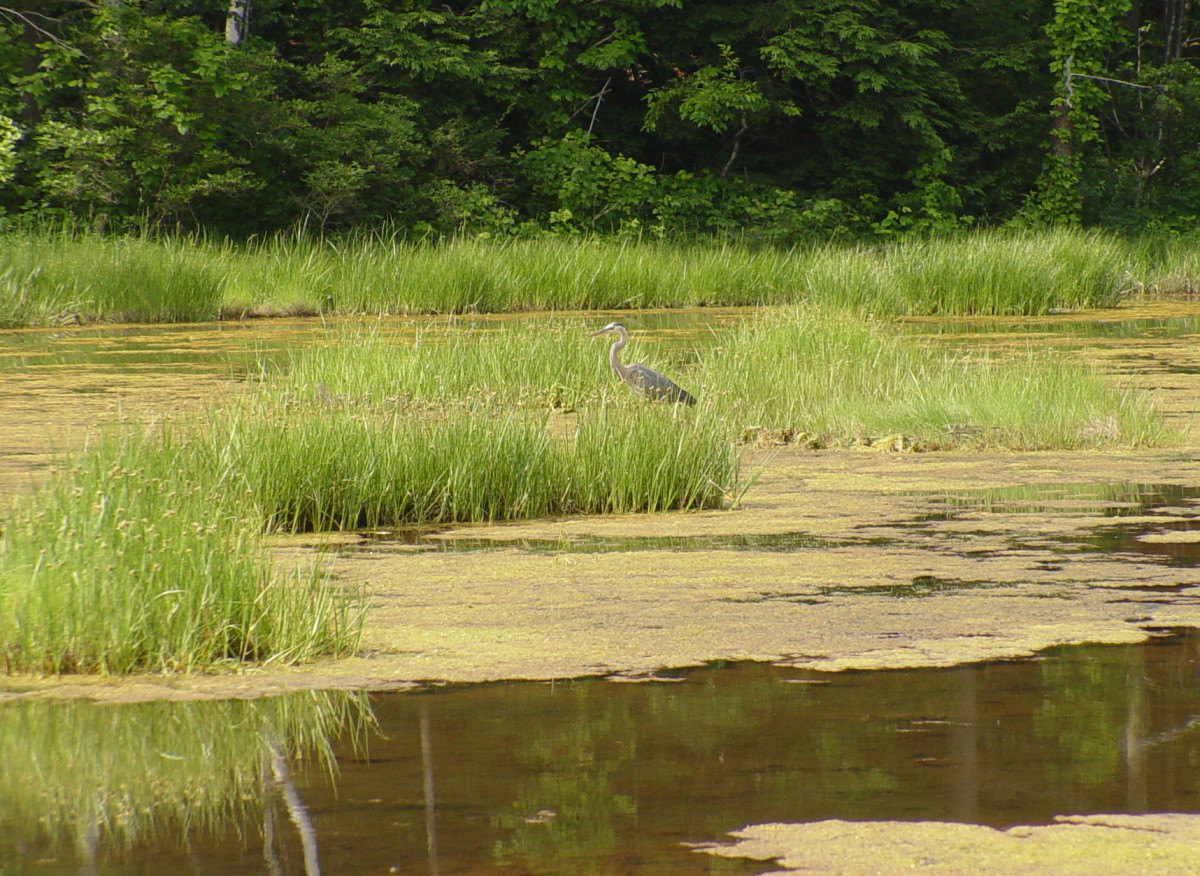 Piscataqua Region Estuaries Partnership